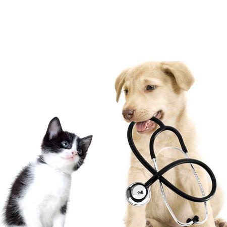 D & N VET Ветеринарная Клиника